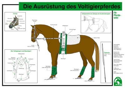 FN-Pferdetafel: Die Ausrüstung des Voltigierpferdes